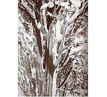 Snow tree Photographic Print
