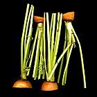 Carrot stems by Daniel Sorine