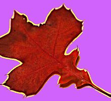Pretty Leaf by LauraBroussard