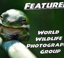 WWP Featured by Dennis Stewart