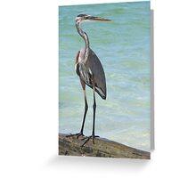 Heron at Stump Pass (Florida, USA) Greeting Card