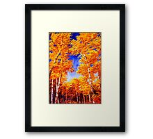 Sky View From the Aspen Forest Framed Print