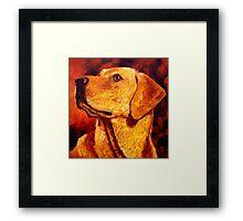 Labrador Dignity Framed Print