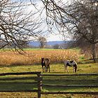 Horses Grazing by nikspix