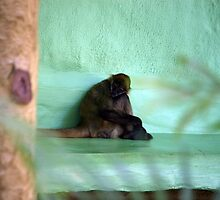 Bored - Spider Monkey by Debbie Thatcher