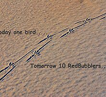 Today one bird; tomorrow 10 RedBubblers..... by Adri  Padmos