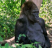 KING, Monkey Jungle, Miami FL by nancyb926