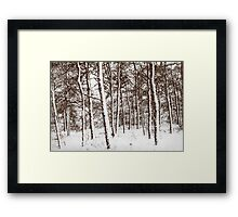 Trees in the snow Framed Print
