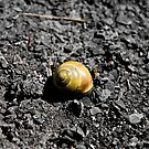 Lone Snail - Montezuma, NY by rjhphoto