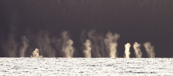 "Little Whale ""Geysers"" by Gina Ruttle  (Whalegeek)"