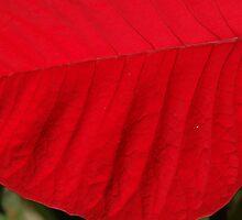 Red Leaf - NSW by CasPhotography