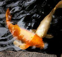 Nishikigoi in Japanese Water garden by Annie Conn