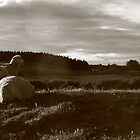 Sheep in the Southern Hills of NZ by Katrina Gubbins