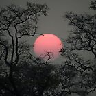 Smoky sunset in Moremi by Neville Jones