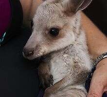 Orphan Joey by Lawrie McConnell