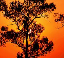 I love a sunburnt country ................ by GeoffSporne