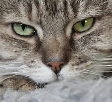 Tabby Cat Settling Down to Sleep by simpsonvisuals