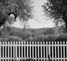 White Picket Fence by Ellen Cotton