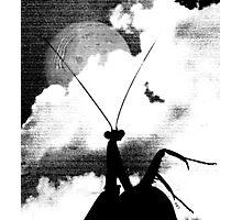 Albino Mantis in shadow Photographic Print