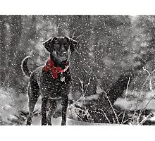 Dashing Through the Snow... Photographic Print