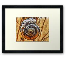 The Perfect Spiral Framed Print