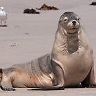 Sealions 6 by fotoWerner