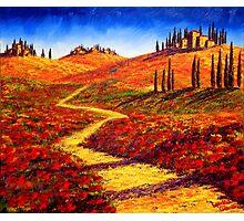 Tuscany Cypress Shadows Photographic Print