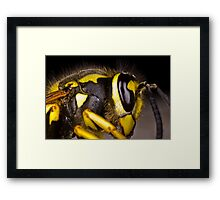 Common wasp close-up Framed Print