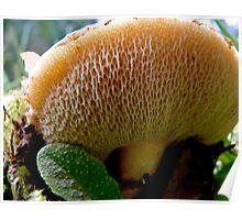honeycomb mushroom Poster