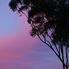 sun set by jane walsh