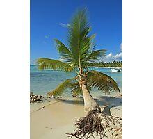 Fallen Palm Photographic Print