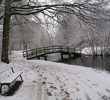 Winter in the park by roumen