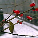 Red Winter Berries by Brian Gaynor