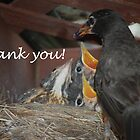 Thank you! birds by Ron  Hanson
