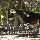 Okapi - You are one of a kind by Ron  Hanson