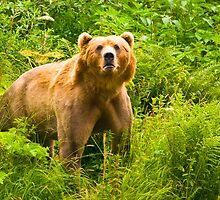 Kodiak Boar, Uyak Bay, Kodiak, Alaska by Albert Dickson