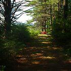 The Path by unigrackon
