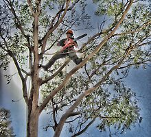 Tree Lopping in Alice Springs by Ausgirl60