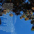 It ain't Kansas, Boy!  (Duncanville, Texas tree) by Wayne Cook