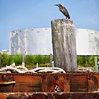florida dock- pelican by nolenphotograph