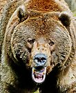 Grizzly welcome by Rodney55