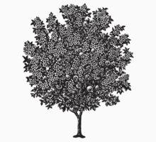 Tree by Zehda