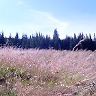 wild mountain meadow in poland by owlontree