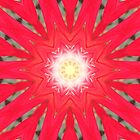 Kaleidoscope flower by medley