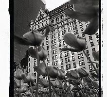 Plaza Hotel by Bruce Hilliard