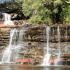 Wentworth Falls  by Paul Duckett