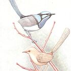 Pair of Blue Wrens - Illustration  by Bianca Todd