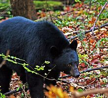 Bear in the Wild... by Terri~Lynn Bealle