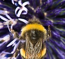 Pollinating by maxblack