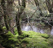 Mossy bank , Enchanted Walk, Cradle Mountain,Tasmania, Australia. by kaysharp